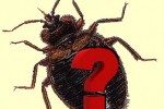 bed-bug-faq