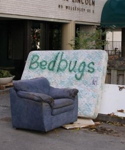 Bed Bug Infestation In Hospitals Increased Over The Years