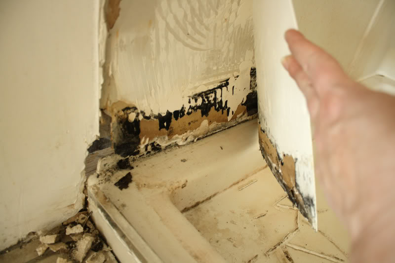 Black Mold Removal Everything You Must Know About These